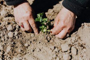 Farming In Red Soil
